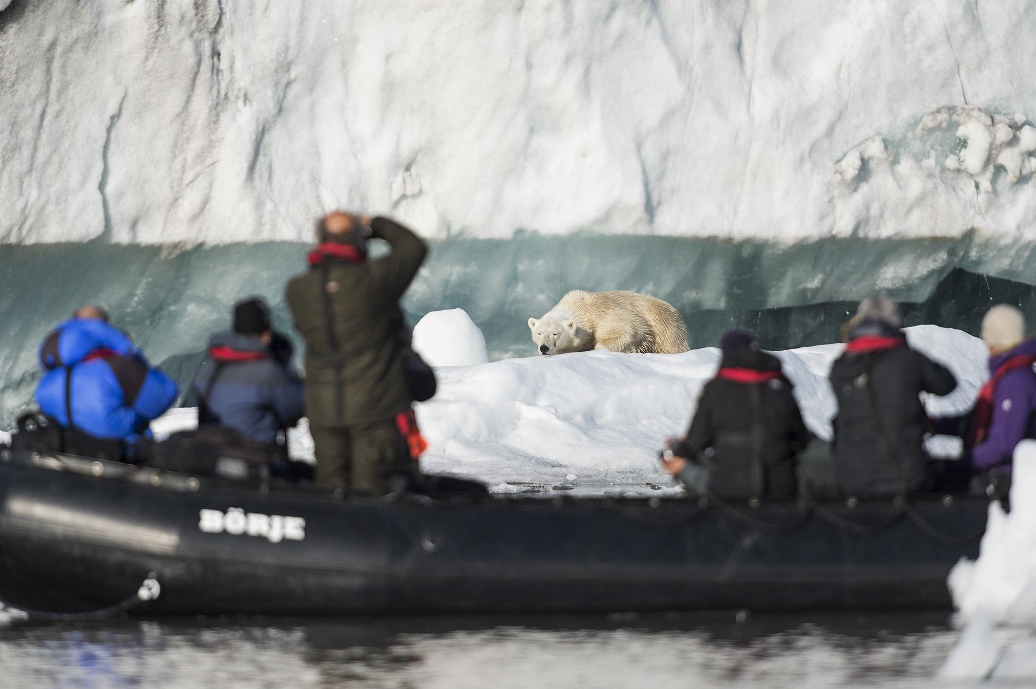 Fotografering av isbjörn på Svalbard. ©Jan Pedersen.