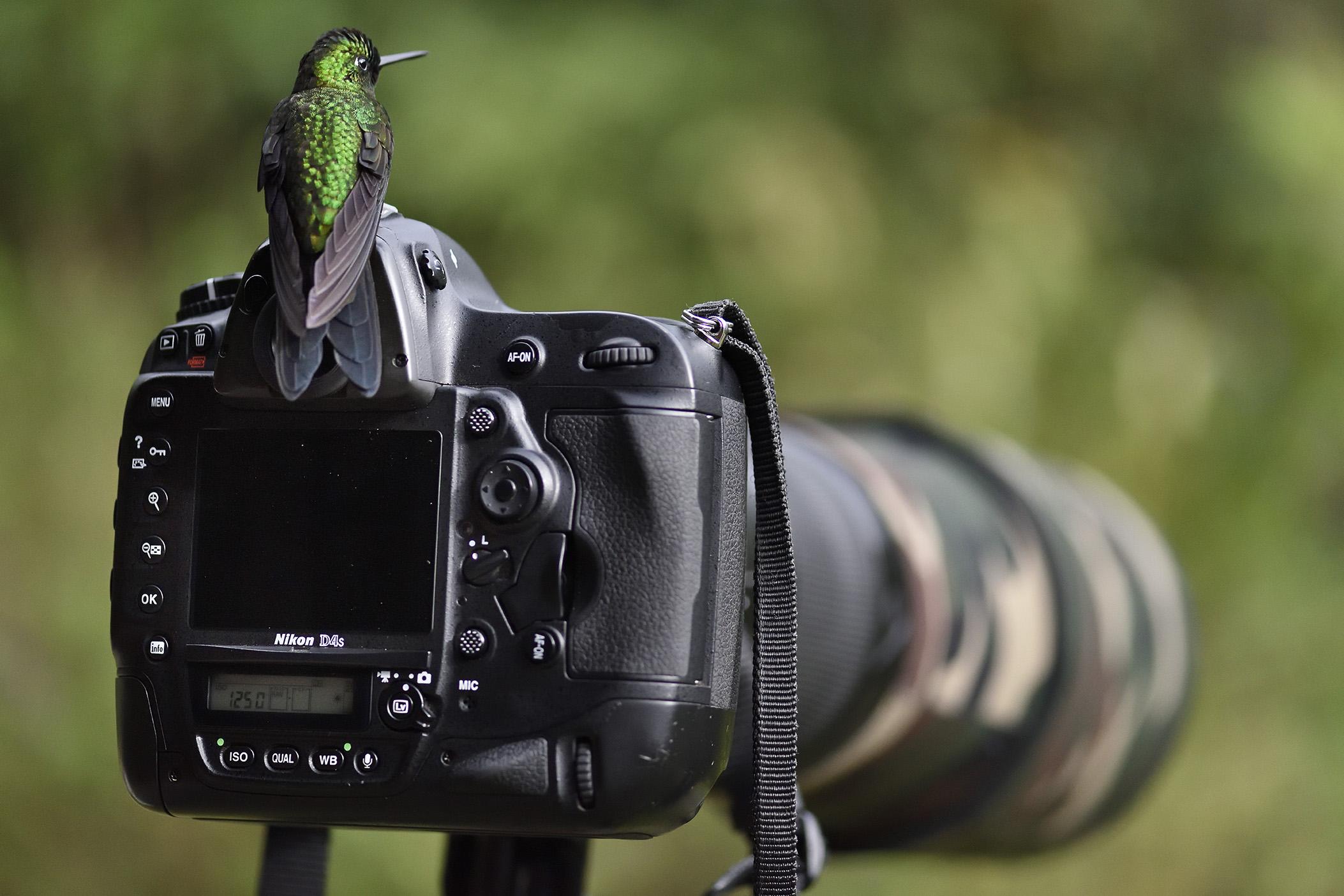 Kolibri, Costa Rica. ©Jan Pedersen.