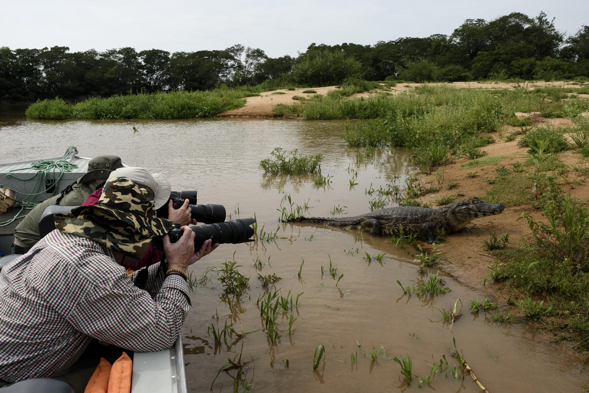 Kaymaner i Pantanal. ©Henrik Karlsson.
