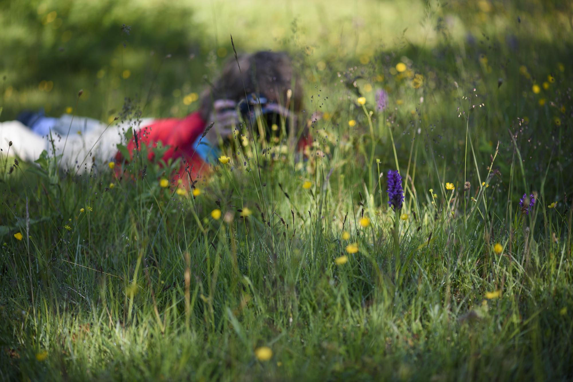I orkidéäng på Öland. ©Henrik Karlsson.