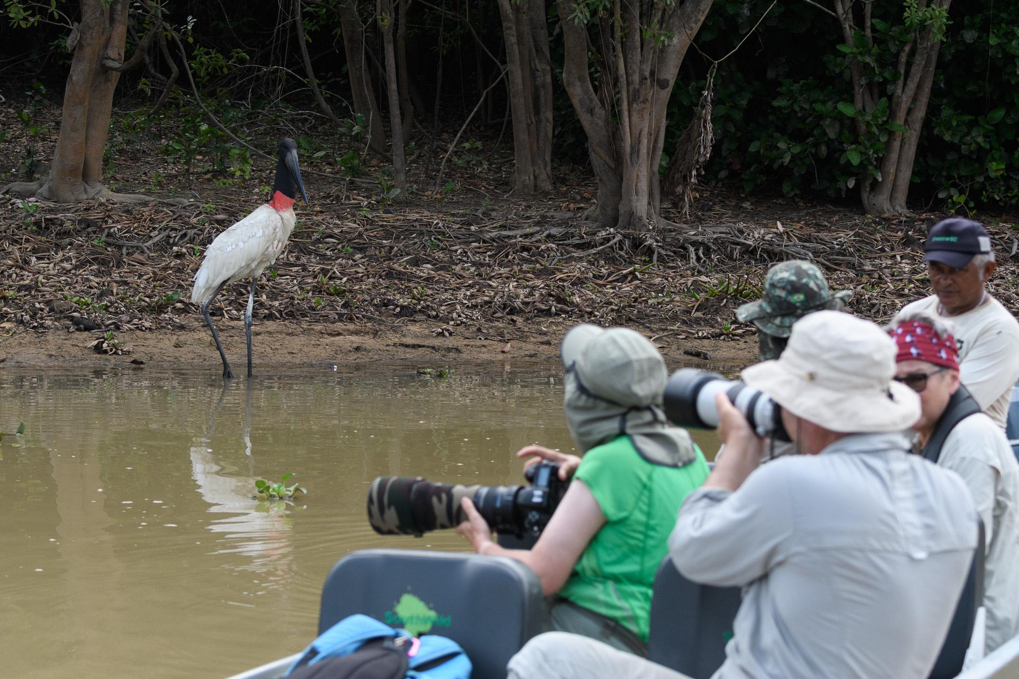 Jabirustork i Pantanal. ©Henrik Karlsson.